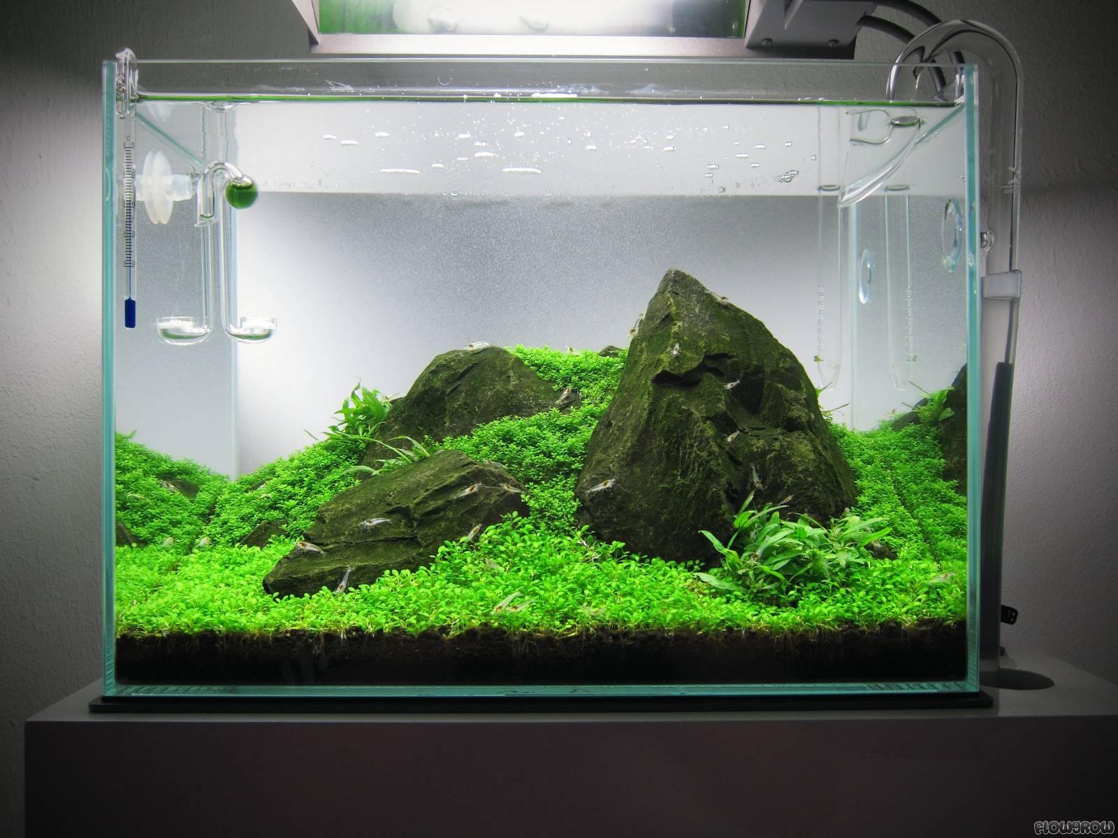 Compact Kitchen Layout Iwagumi Im Glasgarten Mini M Flowgrow Aquascape Aquarium