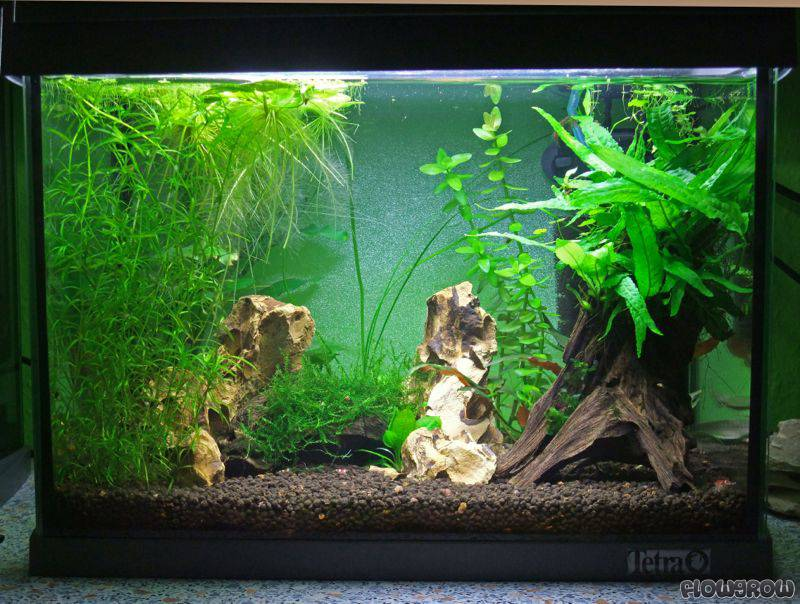 kleines aquarium kaq flowgrow aquascape aquarium database. Black Bedroom Furniture Sets. Home Design Ideas