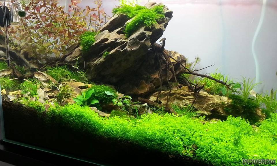 Mein erstes Aquascape ;) - Flowgrow Aquascape/Aquarium Database