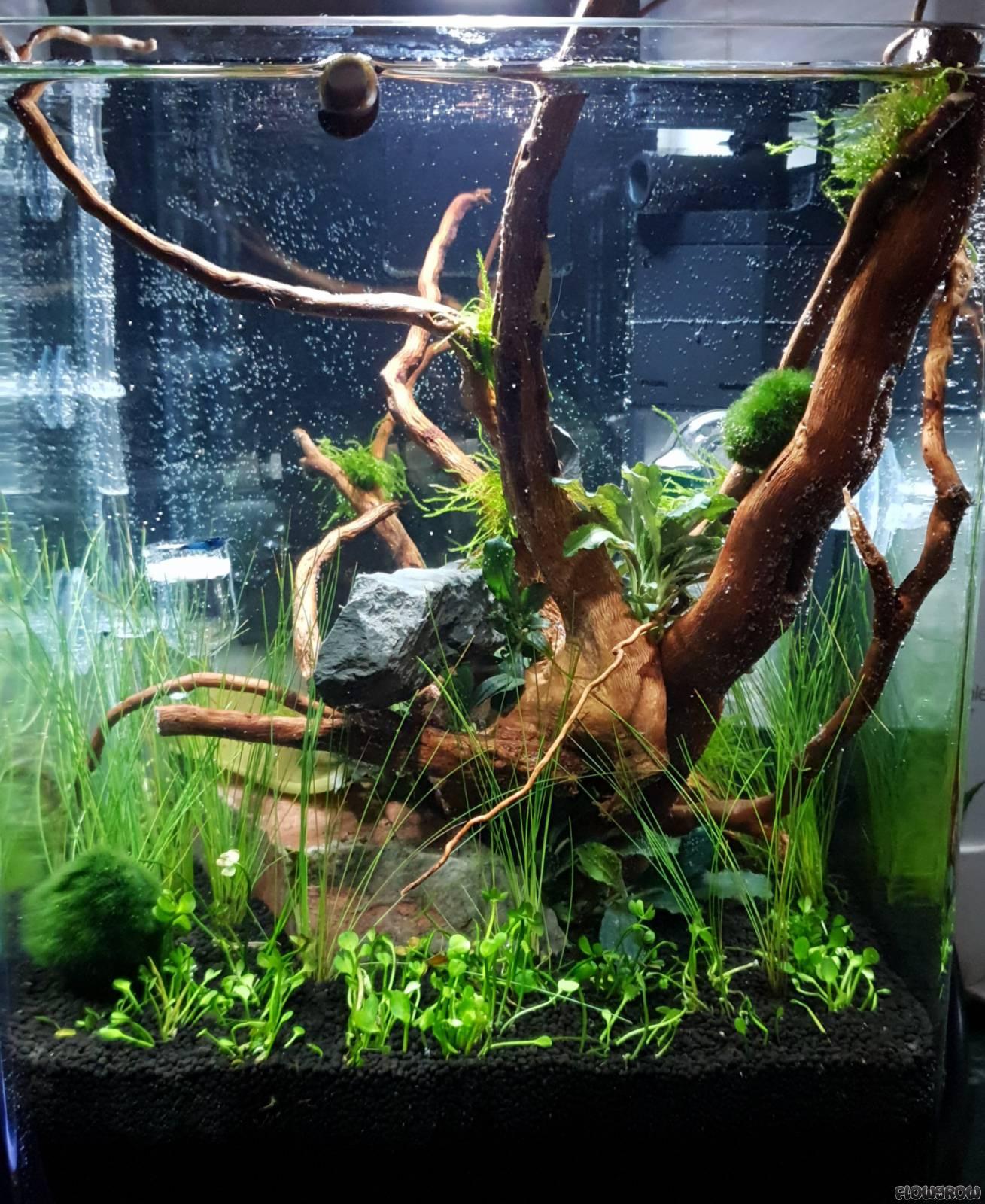 Minicube Küche - Flowgrow Aquascape/Aquarium Database