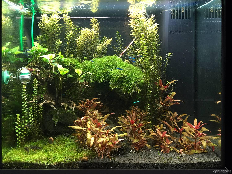 Mooskugels Juwel Lido 120 - Flowgrow Aquascape/Aquarium ...