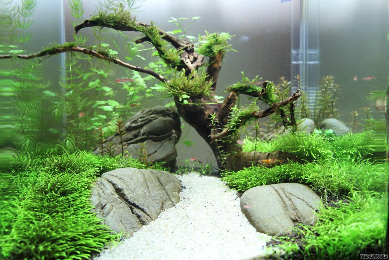 Nano Becken Flowgrow Aquascape Aquarium Database