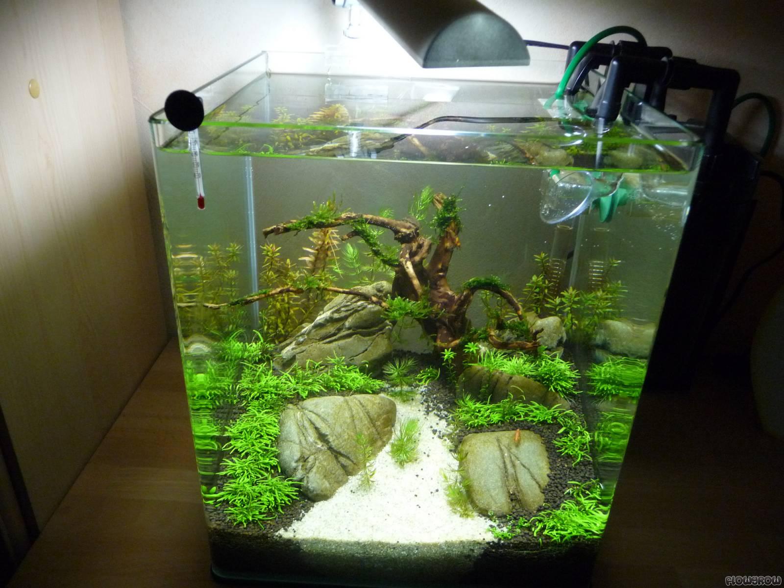Nano becken flowgrow aquascape aquarium database for Aquarium becken