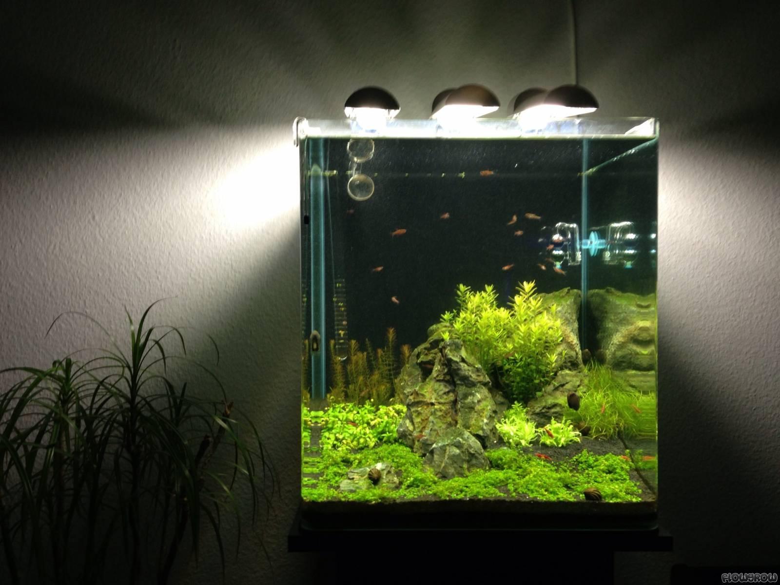 nano cube 60l dennerle flowgrow aquascape aquarium database. Black Bedroom Furniture Sets. Home Design Ideas