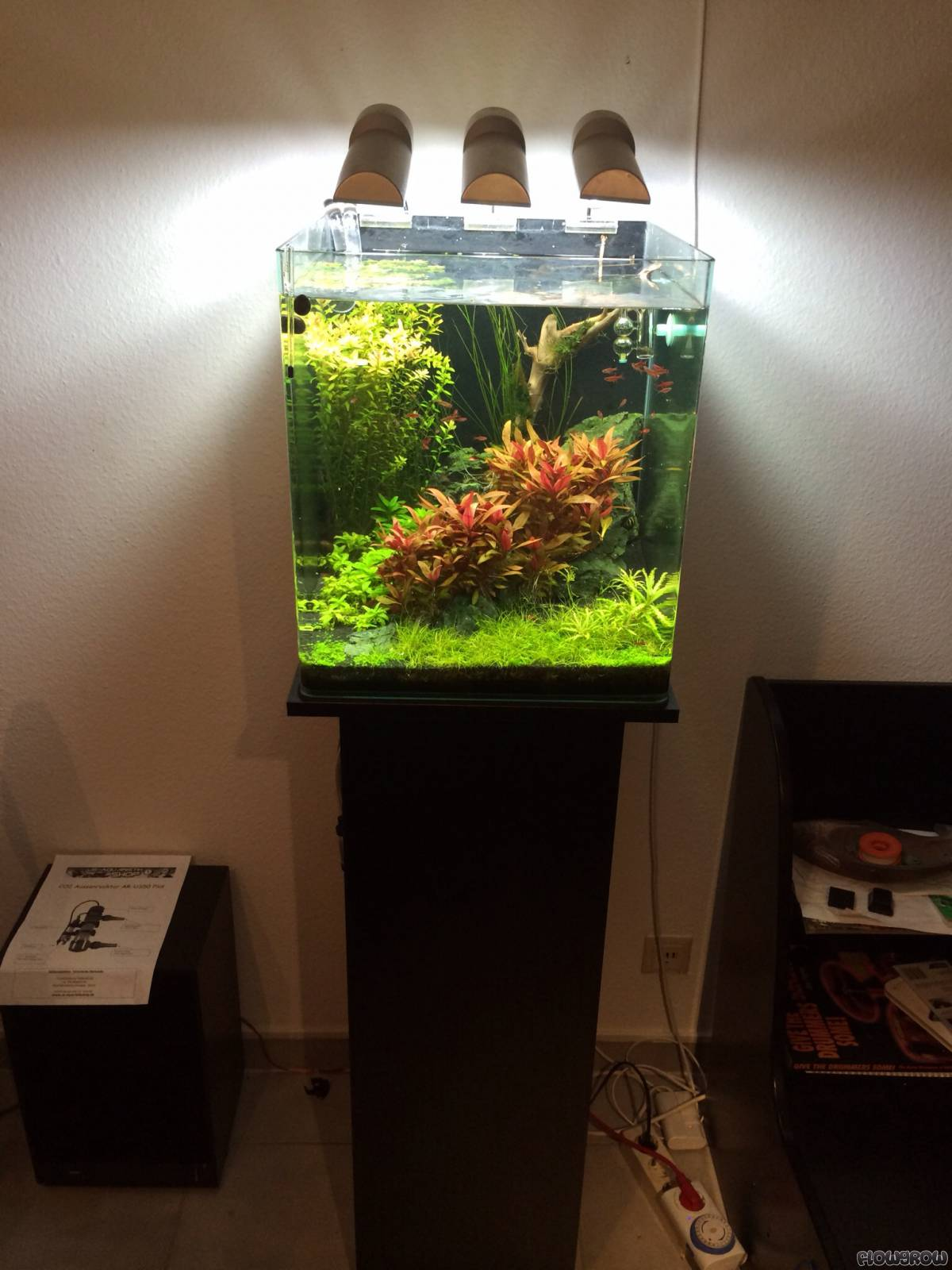 Nano Cube 60l Dennerle Flowgrow Aquascape Aquarium Database