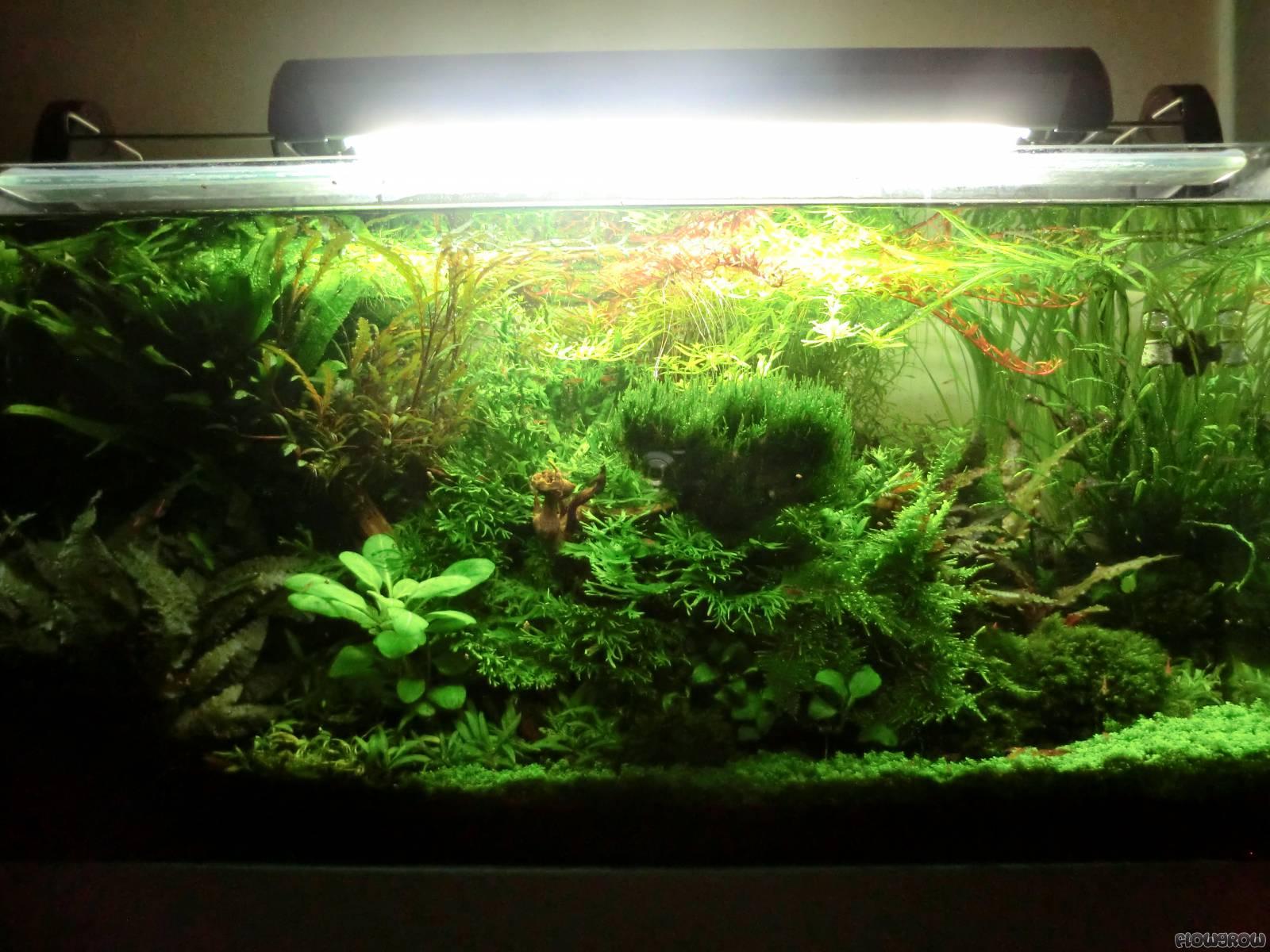 Orrik's AQ 80x40x40 2013 - Flowgrow Aquascape/Aquarium ...