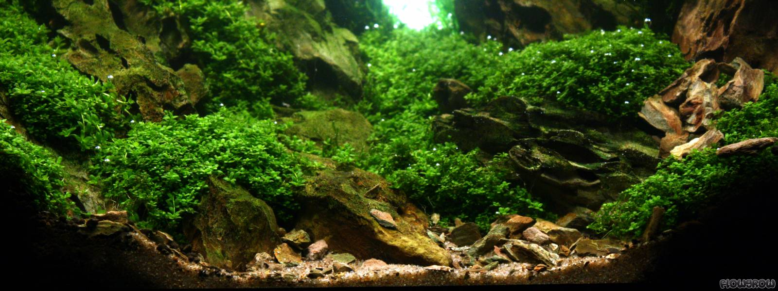 Rocks flowgrow aquascape aquarium database for Aquarium hintergrund ausdrucken