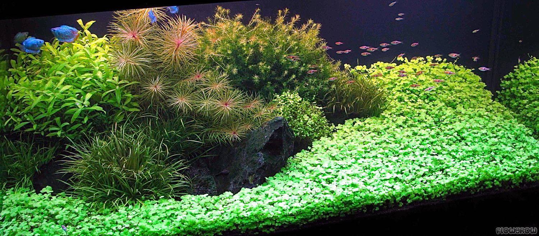 Saphir - Flowgrow Aquascape/Aquarium Database