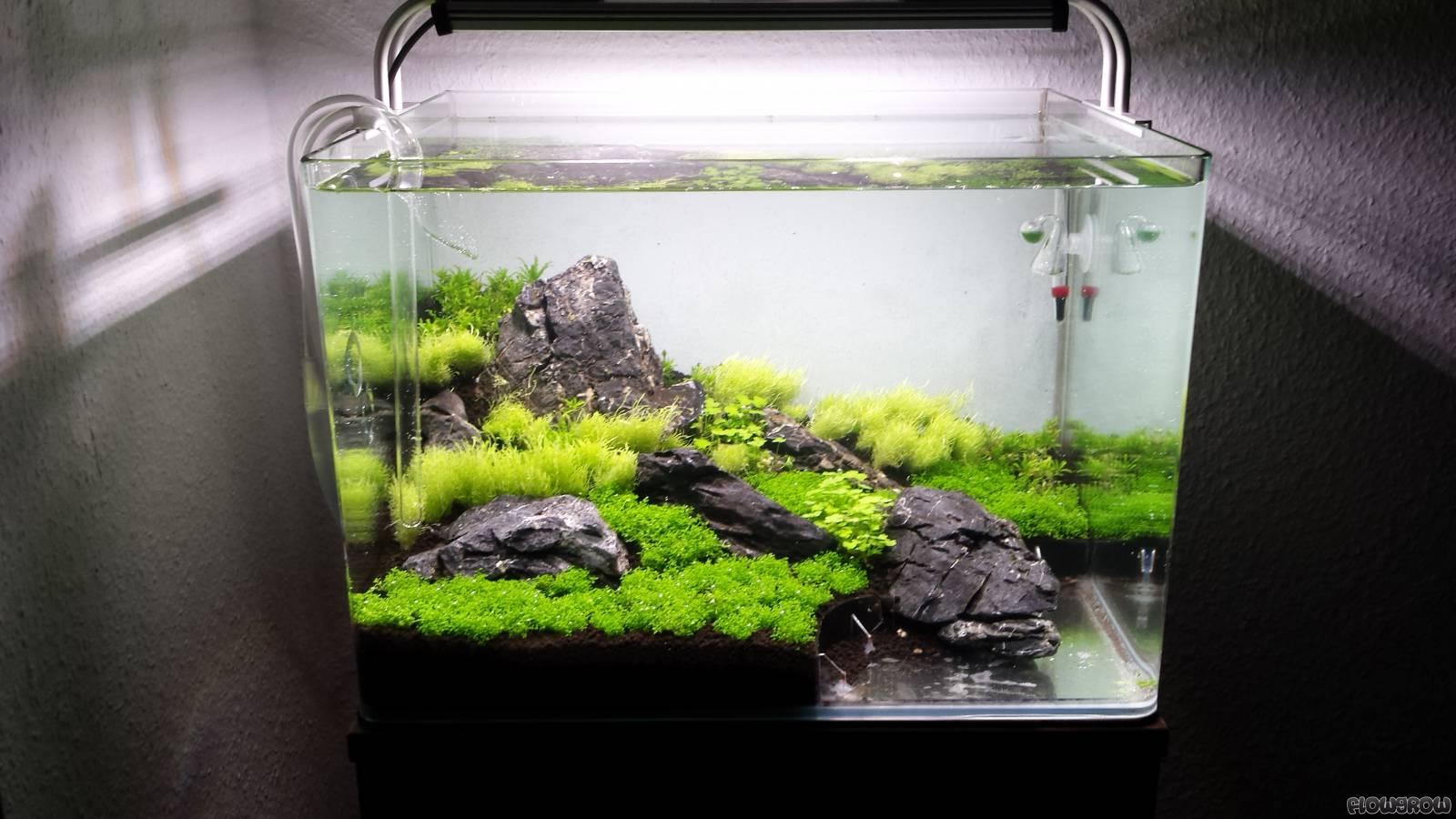 Steilklippe Flowgrow Aquascape Aquarium Database