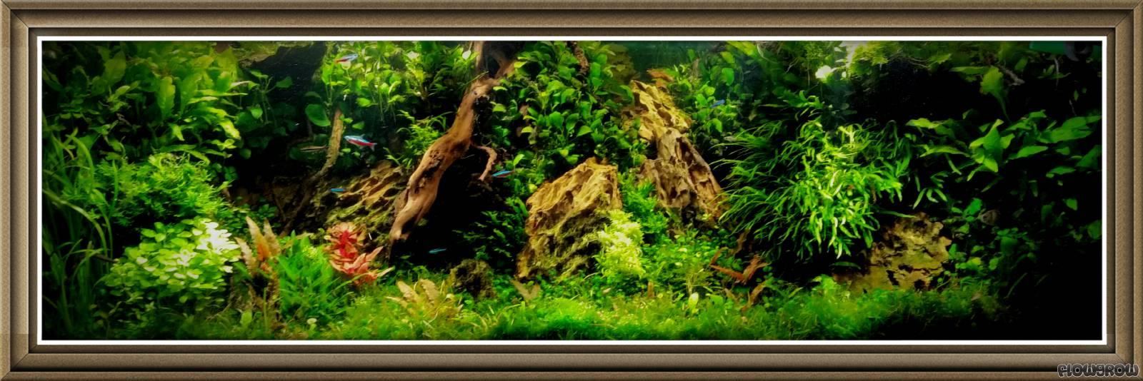 Tobi 180 S Flussufer Panorama Flowgrow Aquascape Aquarium