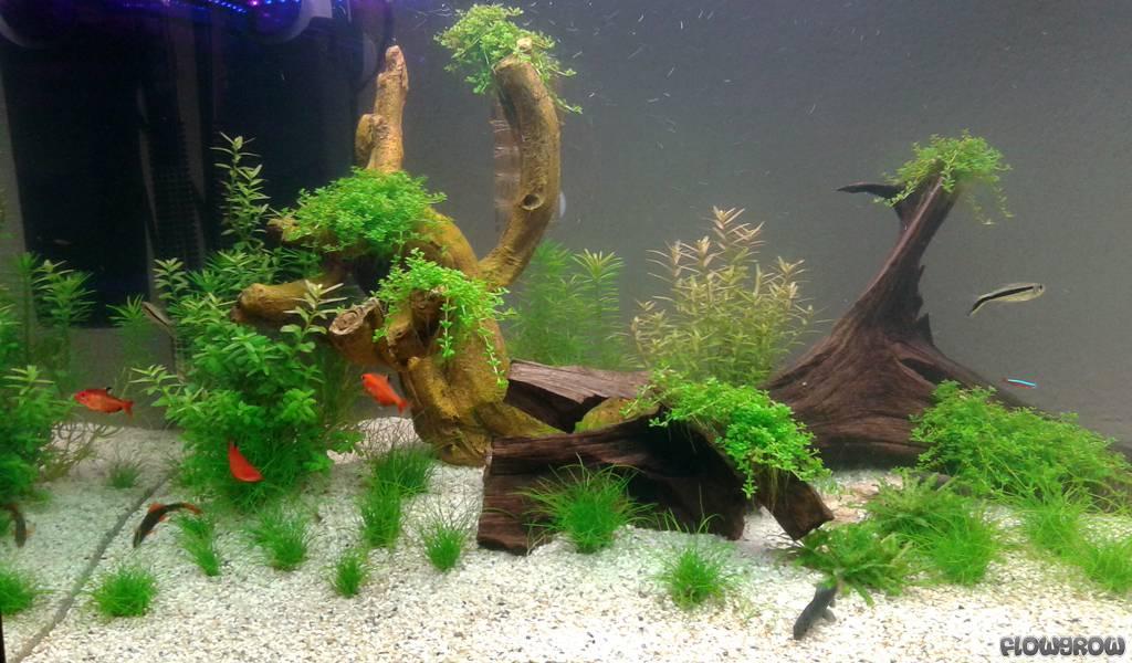 tropical garden flair flowgrow aquascape aquarium database. Black Bedroom Furniture Sets. Home Design Ideas
