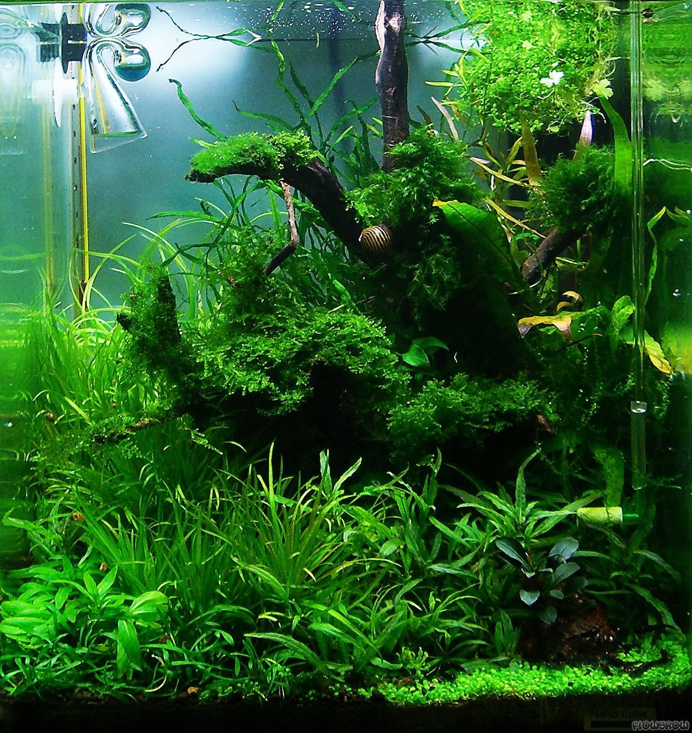 wurzelwerk flowgrow aquascape aquarium database. Black Bedroom Furniture Sets. Home Design Ideas