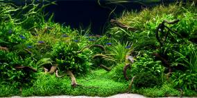 Anyplace, Anytime... - Flowgrow Aquascape/Aquarium Database