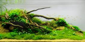 Below - Flowgrow Aquascape/Aquarium Database