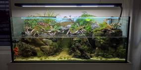 Carnivorous bank - Flowgrow Aquascape/Aquarium Database