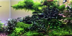 Das Tal der Blumen - Flowgrow Aquascape/Aquarium Database