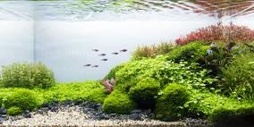 Easing - Flowgrow Aquascape/Aquarium Database
