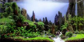 Fallen Giant - Flowgrow Aquascape/Aquarium Database