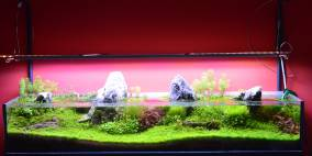 G3 - Flowgrow Aquascape/Aquarium Database