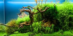 Old Life - Flowgrow Aquascape/Aquarium Database