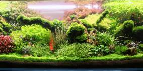 Sassi's 375 Liter - Flowgrow Aquascape/Aquarium Database