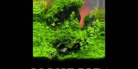 Secret Path - Flowgrow Aquascape/Aquarium Database
