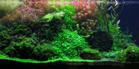 Wasserpflanzen Passion - Flowgrow Aquascape/Aquarium Database