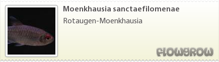 Moenkhausia sanctaefilomenae
