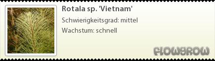 Rotala sp. 'Vietnam'